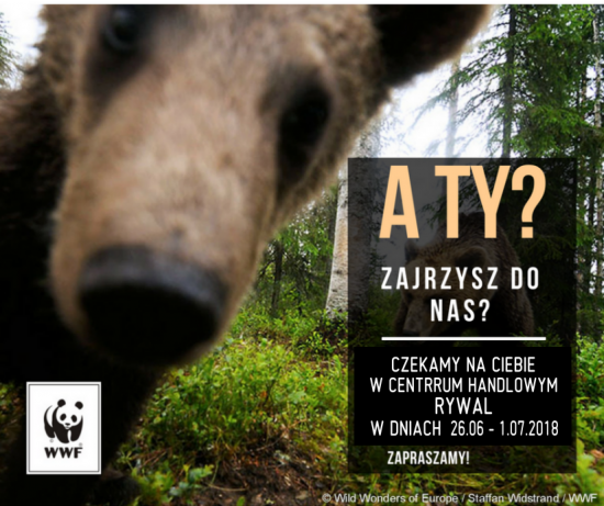 Spotkanie z fundacją WWF ?